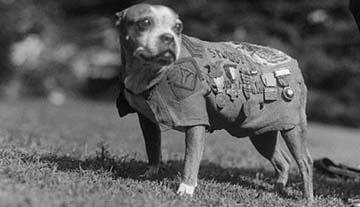 Animals of World War 1